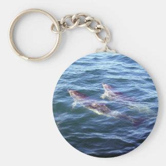 Delphinus delphis keychain