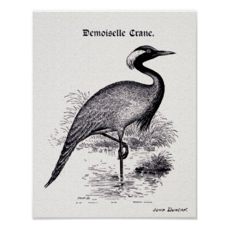 """Demoiselle Crane"" Vintage Illustration Poster"