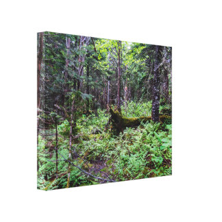 Dense Natural Forest Canvas Print