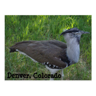 Denver Postcard
