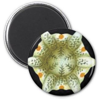 depth of the white flower magnet