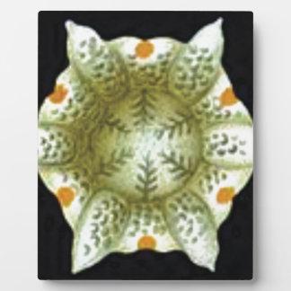 depth of the white flower plaque