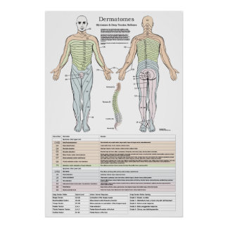 Dermatomes, Myotomes and DTR Poster