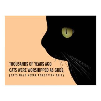 Des chats ont été adorés comme carte postale drôle