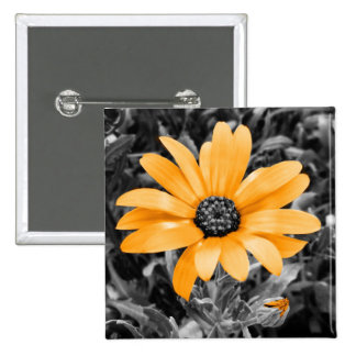 Desaturated Spring Flash African Daisy Photograph 2 Inch Square Button
