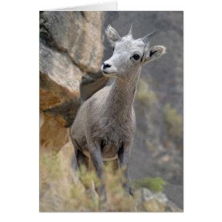 Desert Bighorn Ewe Card