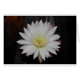 Desert Cactus Bloom Note Card