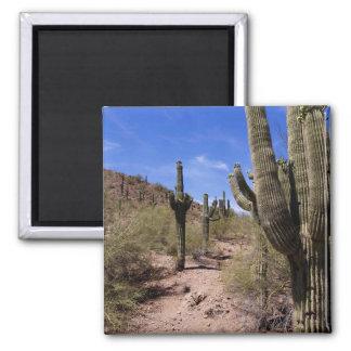 Desert Cactus in Arizona Square Magnet