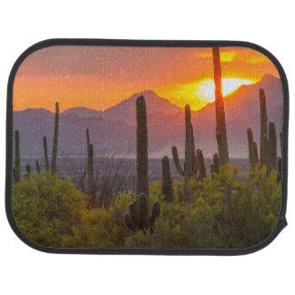 Desert cactus sunset, Arizona Car Carpet