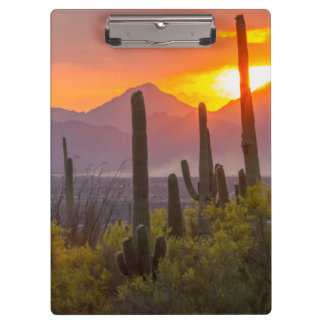 Desert cactus sunset, Arizona Clipboards