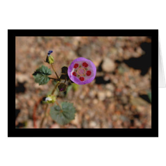 Desert Five Spot Note Card