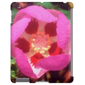 Desert Five Spot Wildflower