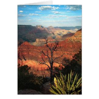 Desert Flora Card
