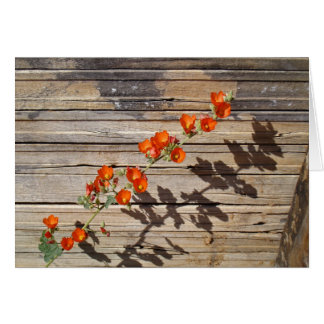 Desert Globemallow Card