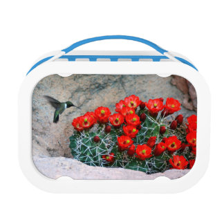 Desert Hummingbird Lunch Box