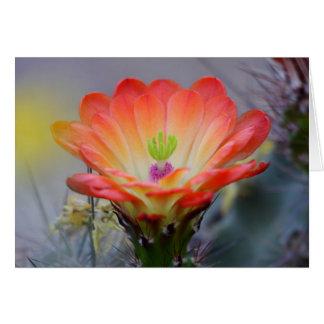Desert in bloom card