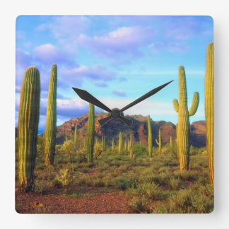 Desert in springtime square wall clock