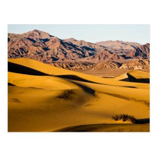 Desert Playground Postcard