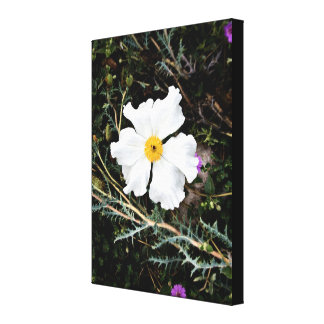 "Desert Prickly Poppy || Wrapped Canvas 18"" x 24"""