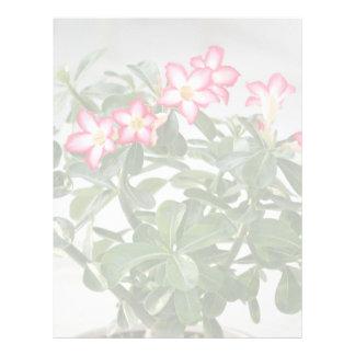 Desert Rose Flowers Plant Letterhead Design