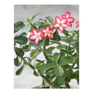 Desert Rose Flowers Plant Letterhead Template