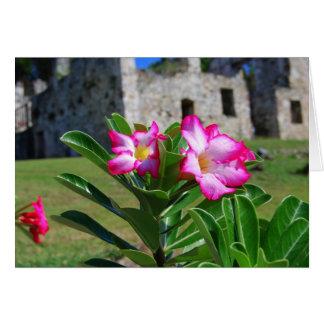Desert Rose Flowers, St. John V.I. Sugar Mill Card