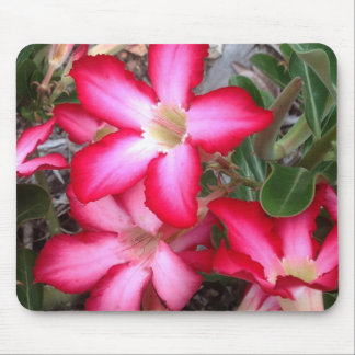 Desert Rose mousepad