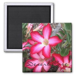 Desert Rose photo magnet