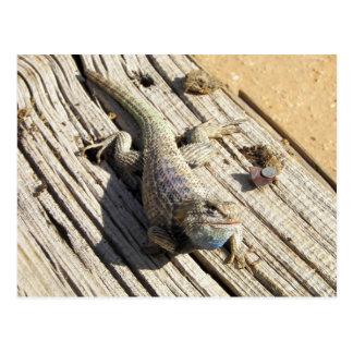 Desert Spiny Lizard Postcard