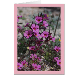 Desert Spring Wildflower Bigelow's Monkey Flower Card