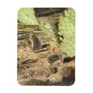 Desert Squirrels in Tucson Magnet