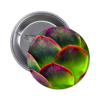 Desert Succulent in Bright Sun and Shade 2 Inch Round Button