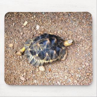 desert tortoise mouse pad