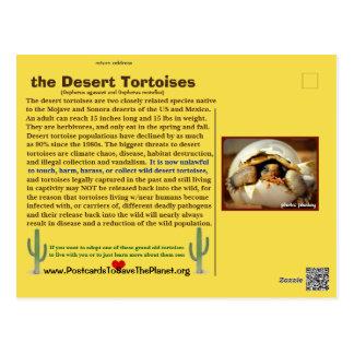 Desert Tortoises are threatened with extinction - Postcard