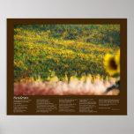 Desiderata - gisements de tournesol en soleil posters