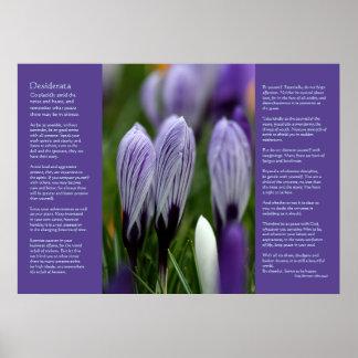 Desiderata Poem - Variegated Spring Crocuses Poster