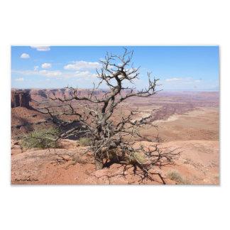 Desierto desierto photo print