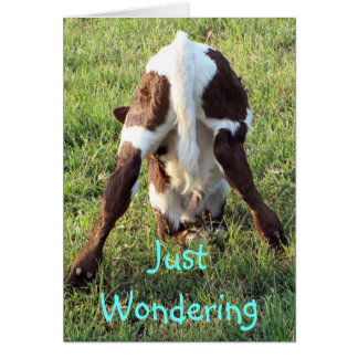 Dessa's baby calf 2-customize any occasion card