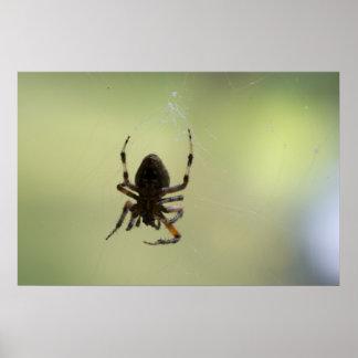 Dessous d'araignée poster