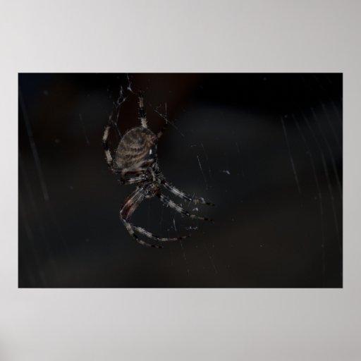 Dessous d'araignée avec l'éclair affiche