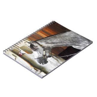 Destin - Horse Haven Notebook