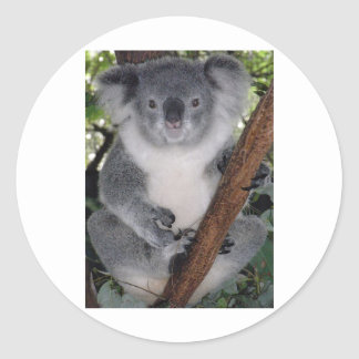 Destiny Zazzle Cute Koala Aussi Outback Classic Round Sticker