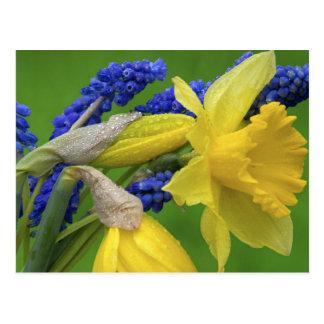 Détail des fleurs de jonquille et de jacinthe. carte postale