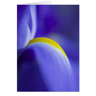 Détail en gros plan d'un iris de drapeau bleu carte de vœux