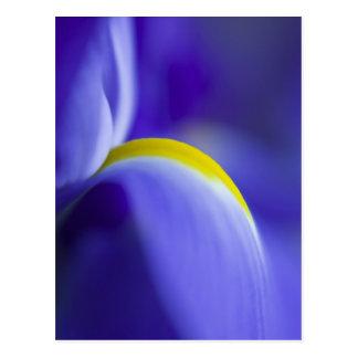 Détail en gros plan d'un iris de drapeau bleu cartes postales
