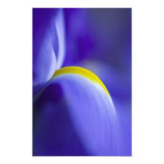 Détail en gros plan d'un iris de drapeau bleu photographies d'art
