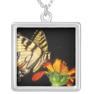 Detail of a captive western tiger swallowtail square pendant necklace