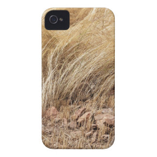 Detail of a teff field during harvest iPhone 4 case