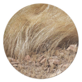 Detail of a teff field during harvest plate
