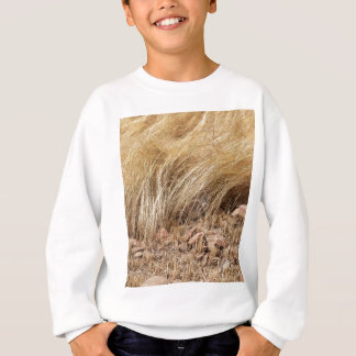 Detail of a teff field during harvest sweatshirt